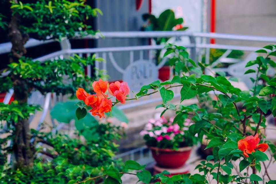 Vườn hoa PoLi